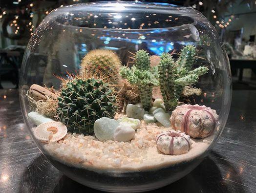 cactus terrarium workshop Singapore